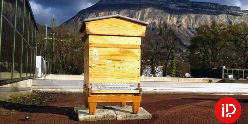 Des abeilles butinent sur le toit d'Hipcom